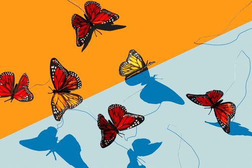 1_0_722_1leftovers_butterflies_1.jpg