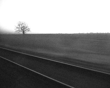 ghosttree.jpg