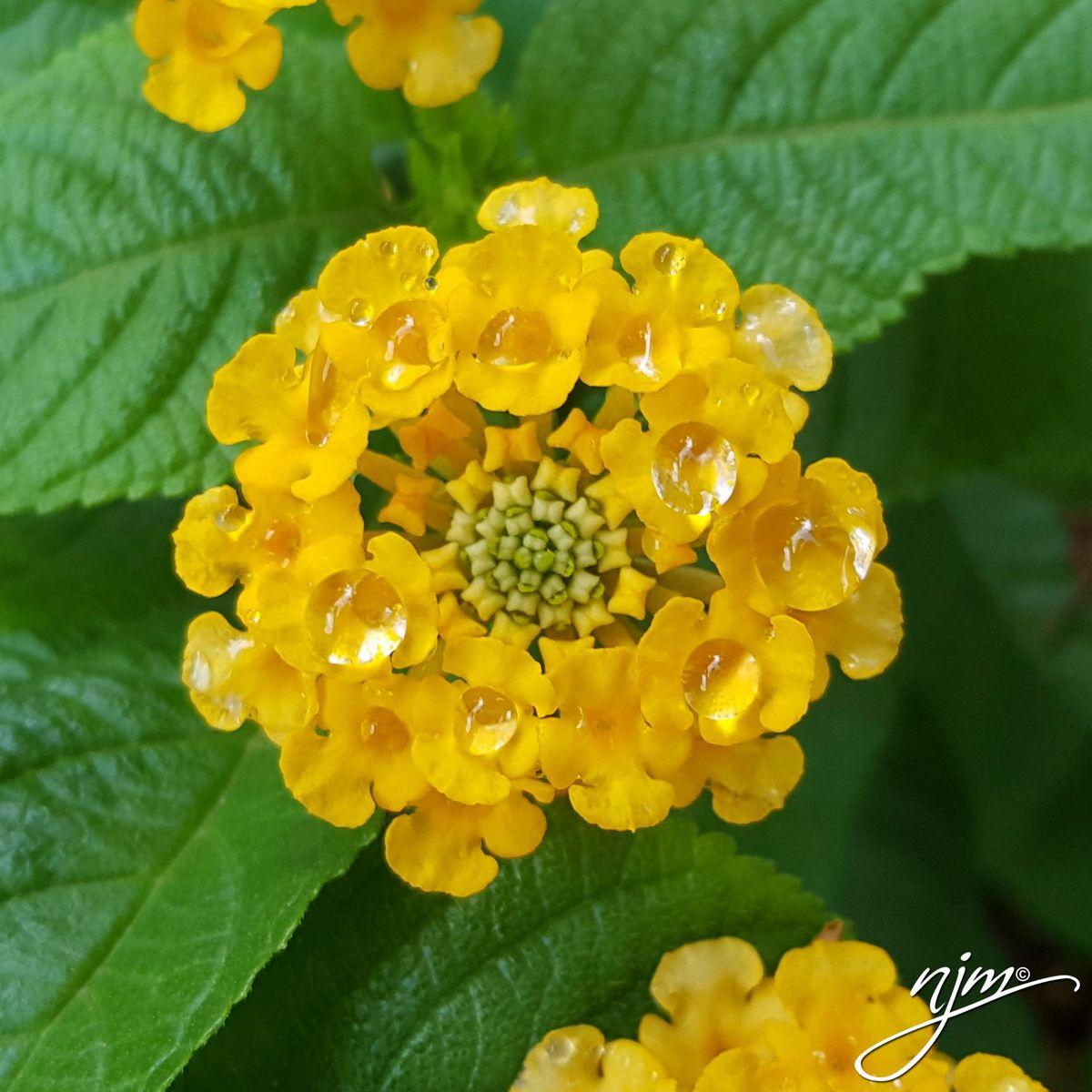 RANDOM FLOWERS-2.jpg