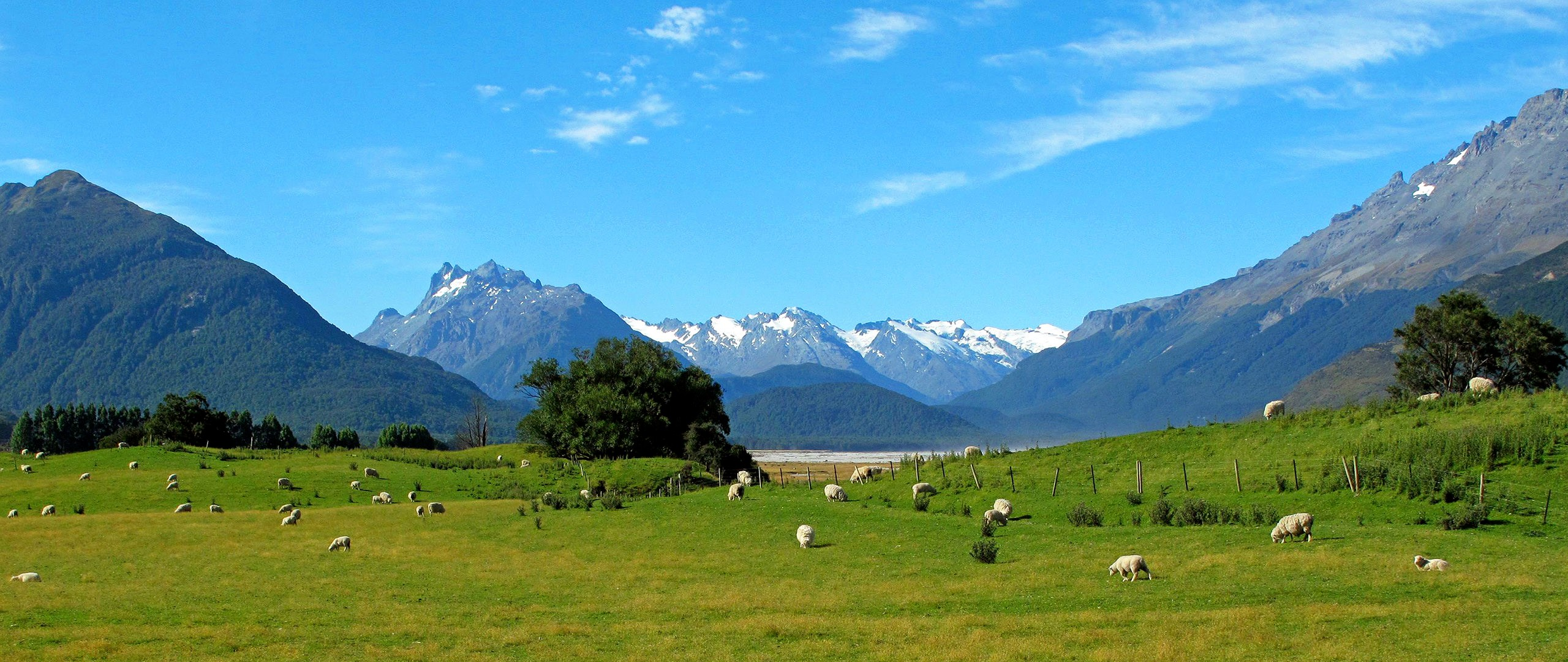 New Zealand Countryside
