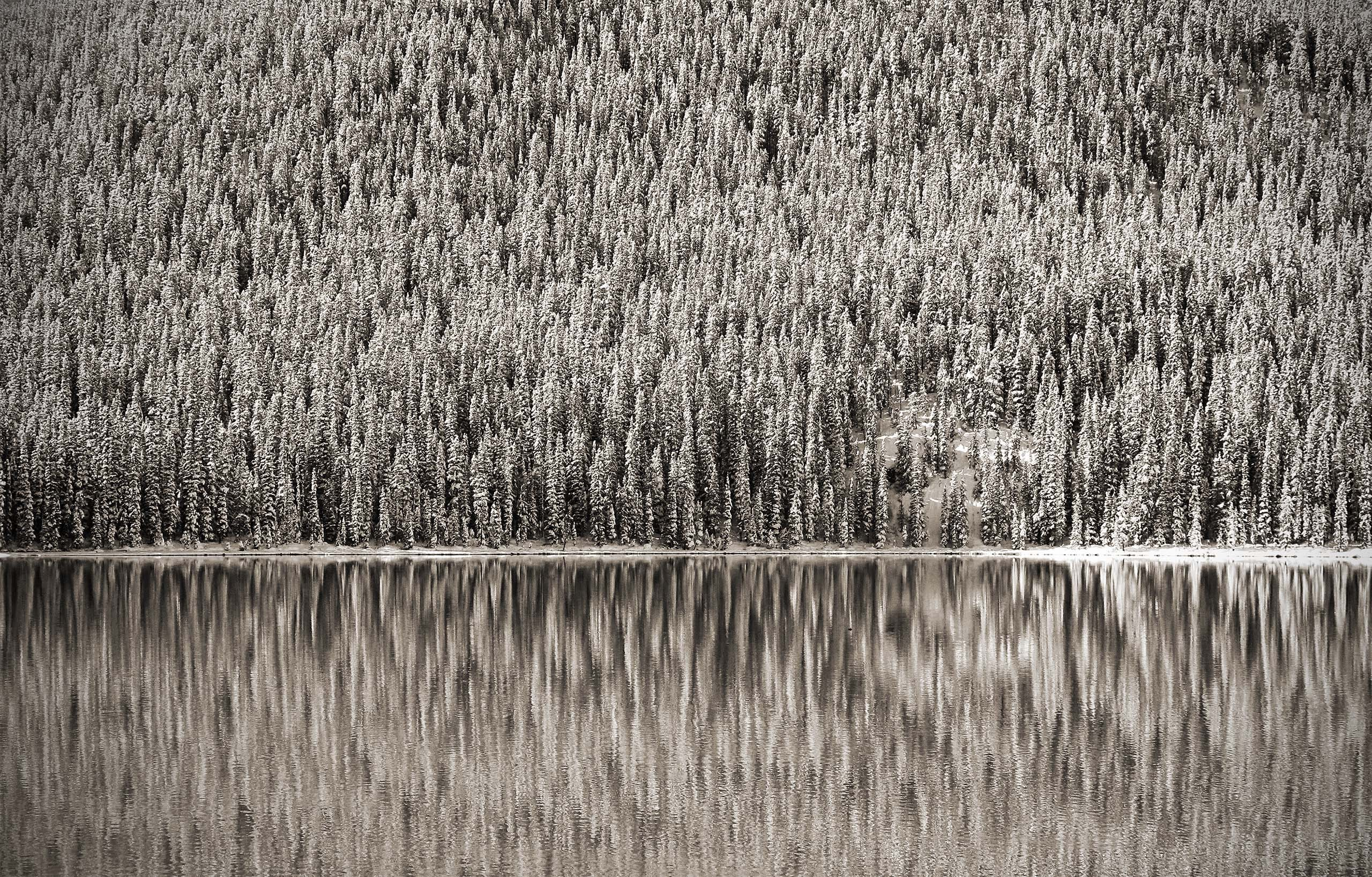 Pine Reflection