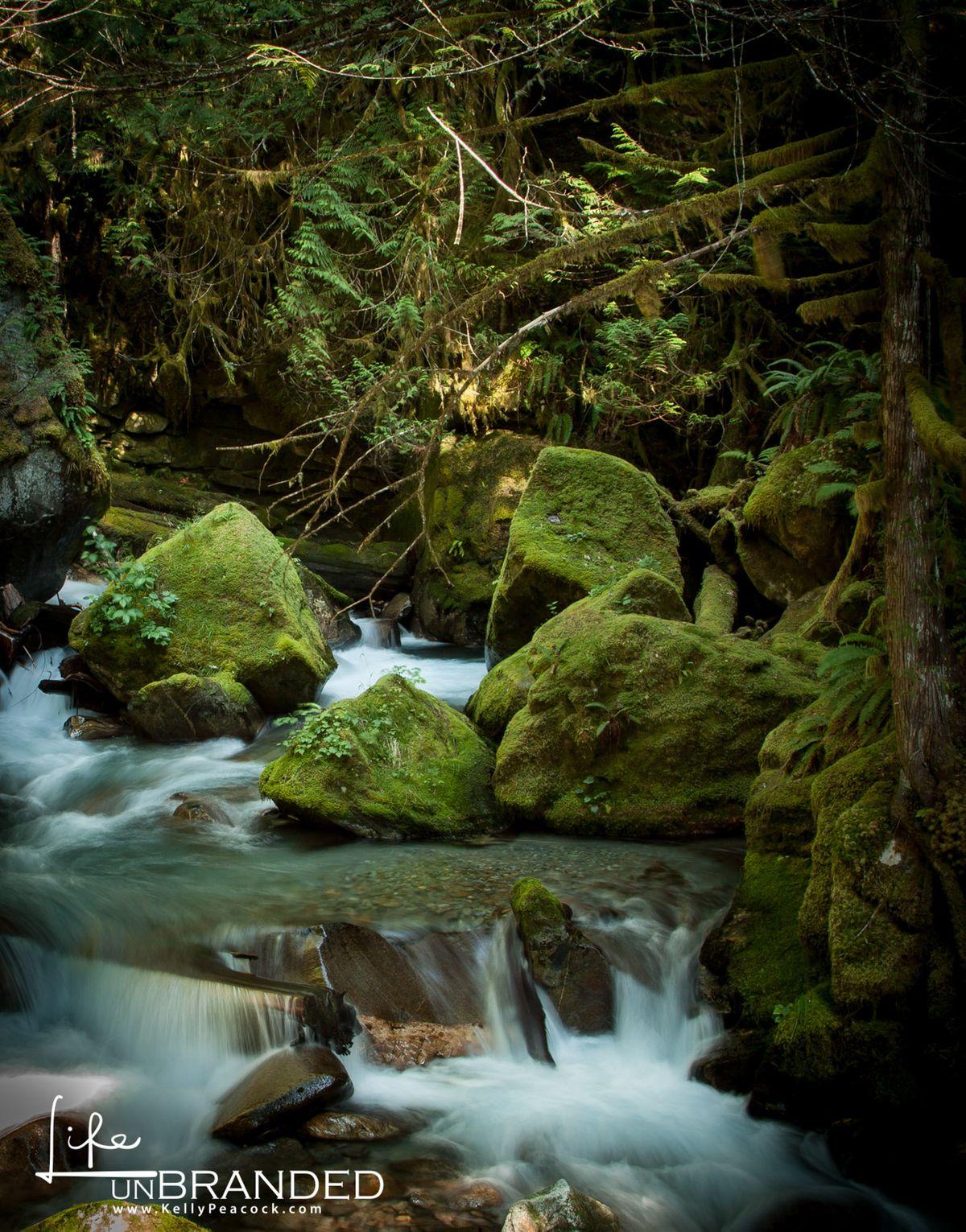 WA Creek.jpg