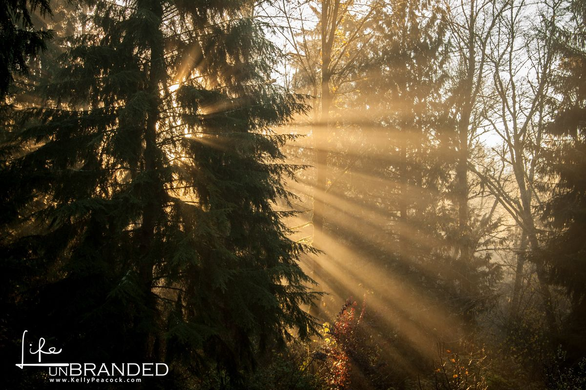 Sunrays in trees.jpg