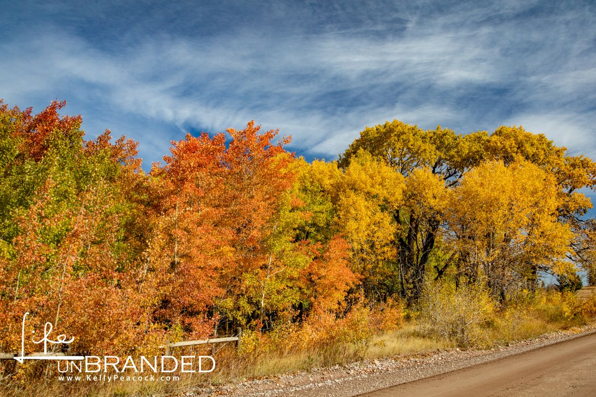 Fall Colors in the Dearborn Canyon
