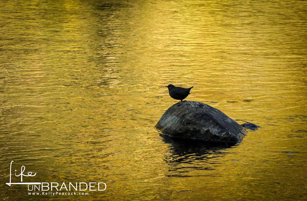 Bird_rock-2.jpg