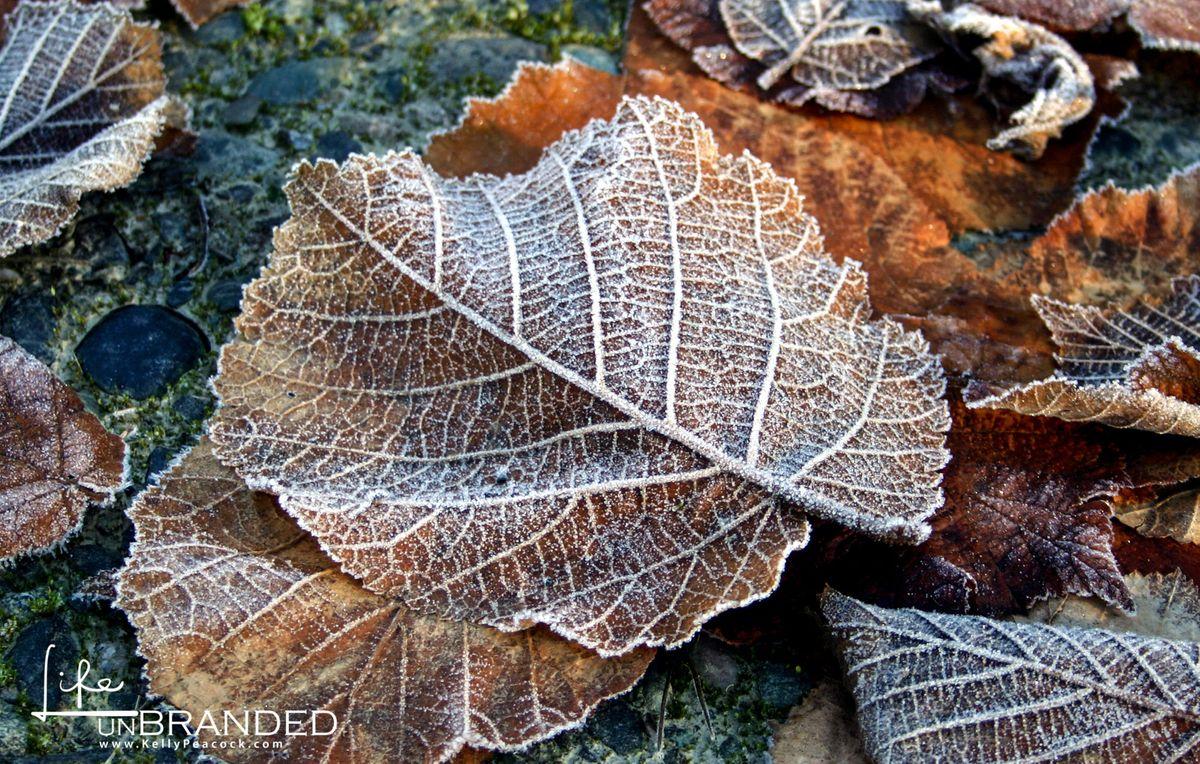 Frozen Leaves.jpg