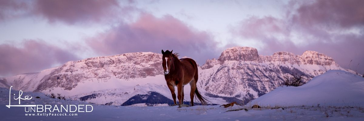 Horse and Sawtooth Ridge