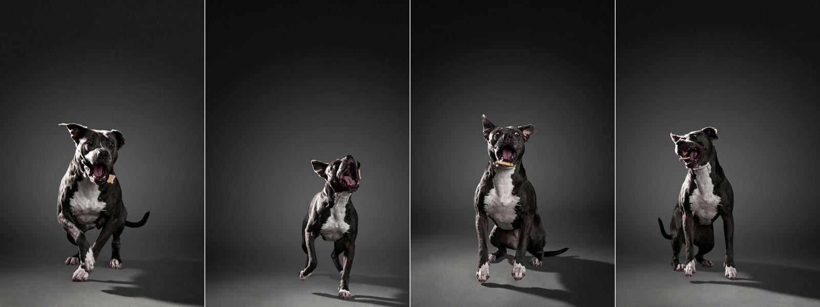 1grey_dog_bone_quadriptych.jpg