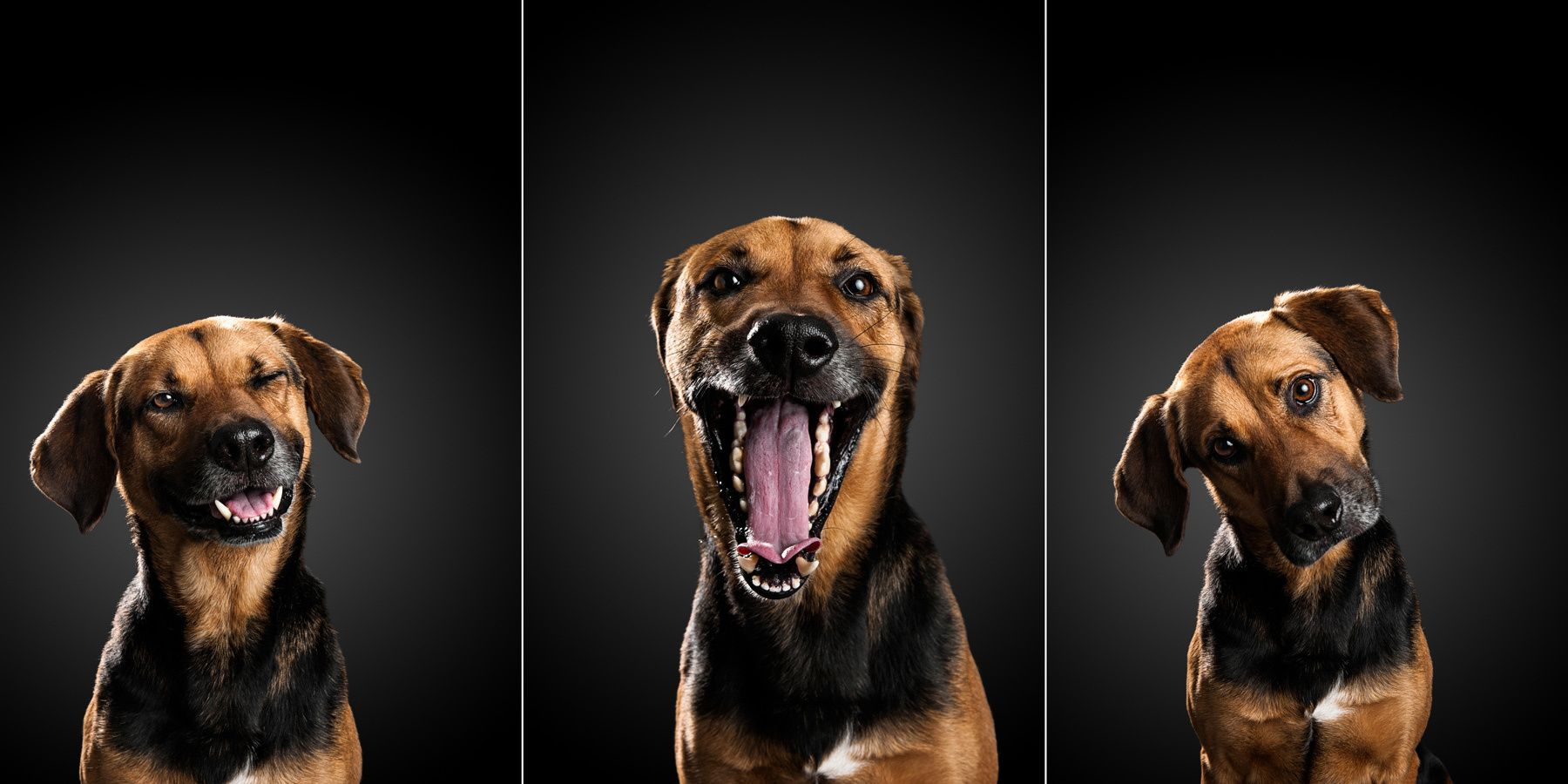 1tryptic_rescue_dogs6__.jpg