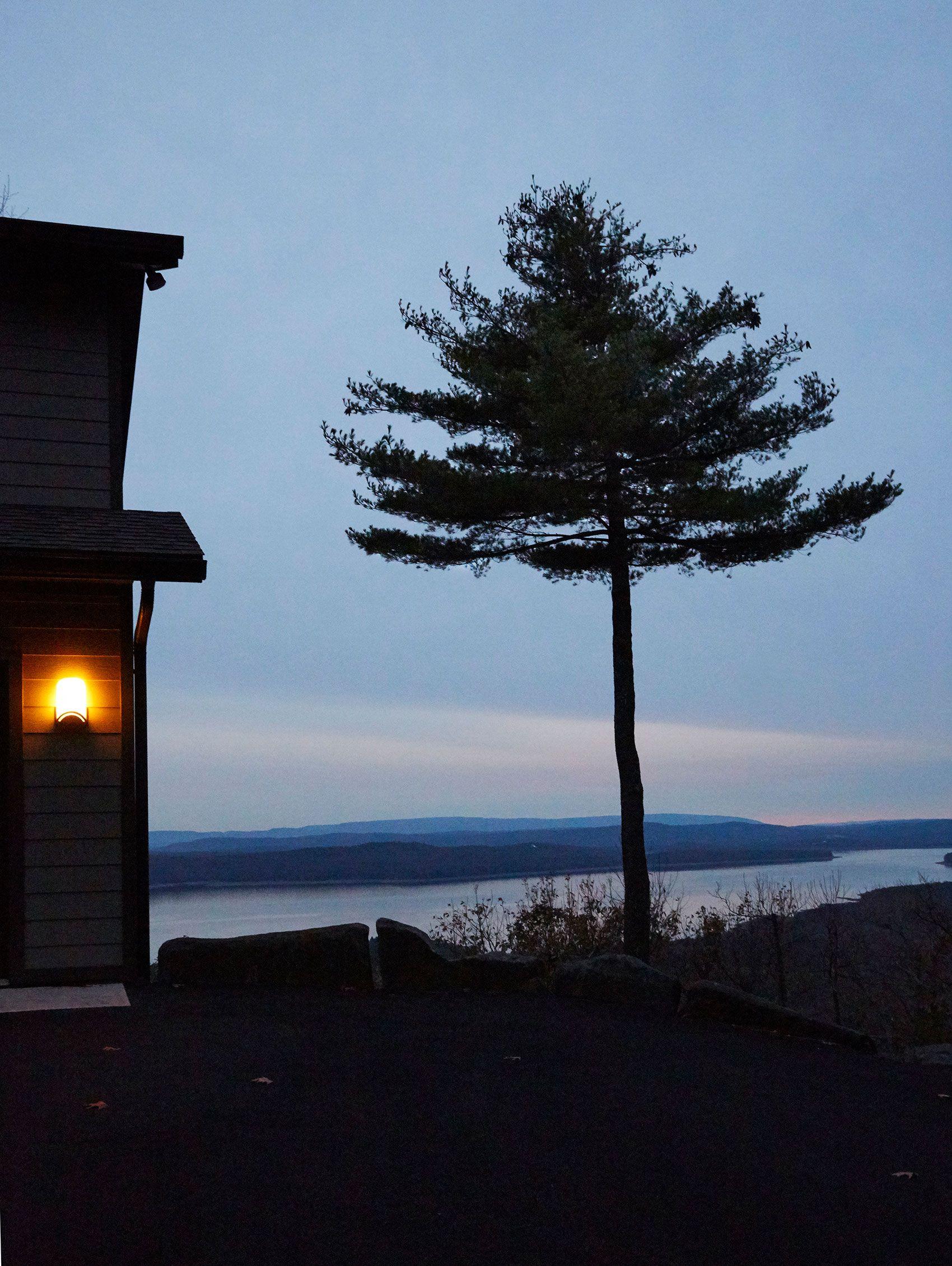 Lone pine, Shokan Resevoir, Woodstock, NY