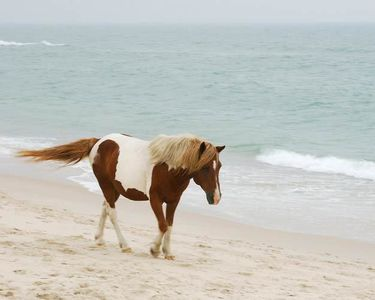 25_0_70_1md_ass_horse_8x10_065.jpg