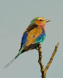 10_0_44_1r200709_Africa_birds__83_.jpg