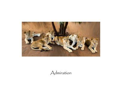 """Admiration"""