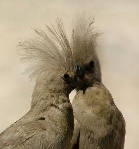 8_0_42_1r200709_Africa_birds__59_.jpg