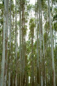17_0_34_1sa_ecu_trees_6144.jpg