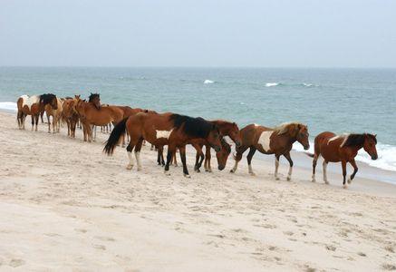3_0_11_1md_ass_horses_086.jpg