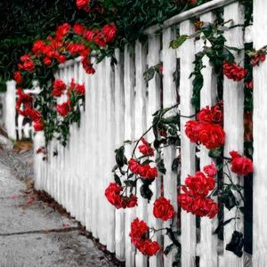 4_0_18_1walk_of_roses.jpg