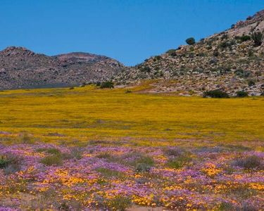 8_0_55_1r200709_Africa_flowers__241_.jpg