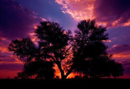 15_0_35_1sa_kh_005__3_tree.jpg