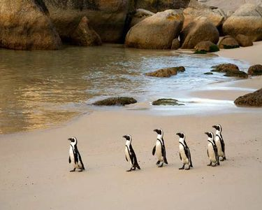 11_0_51_1r2007_sa_penguins_3__8_.jpg