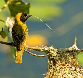 9_0_43_1r200709_Africa_birds__6_.jpg
