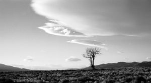 Tree and Clouds Nevada 1971