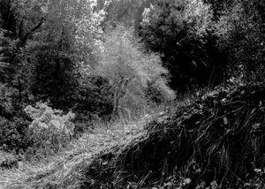 Landscape Santa Cruz,CA.1977