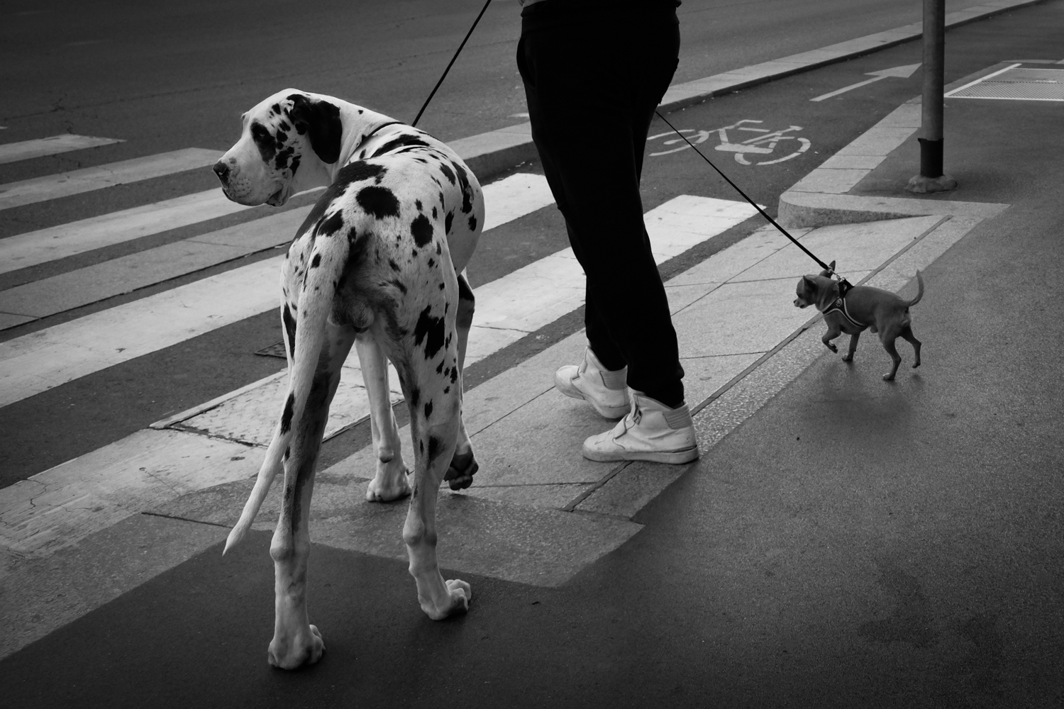 Man's best friends (Milan, Italy)