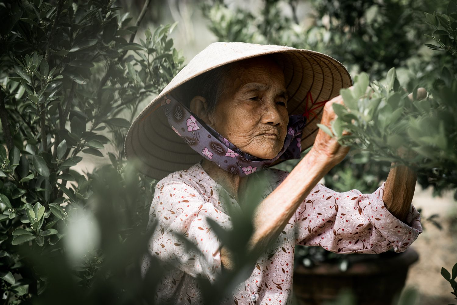 Concentration (Hoi An, Vietnam)