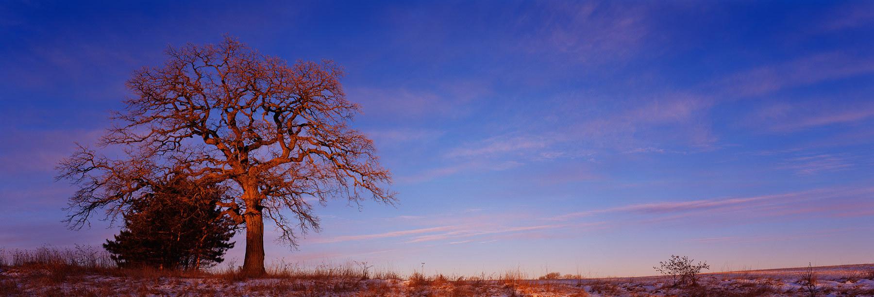 Mighty OakBruce Starrenburg Photography