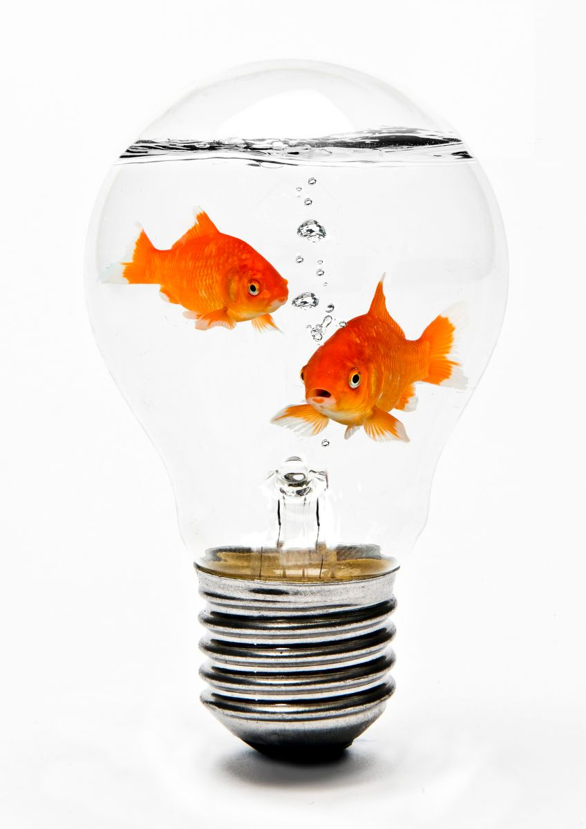 1goldfish_in_lightbulb.jpg