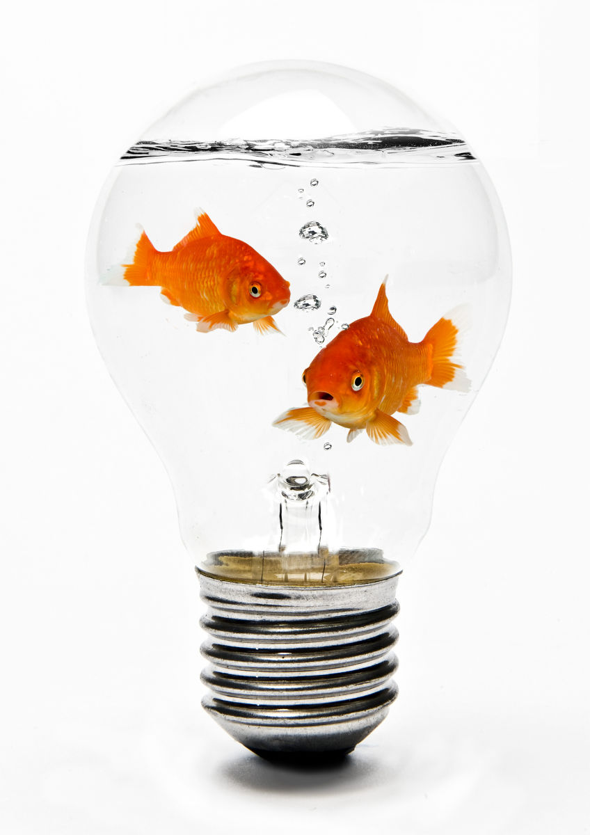 1goldfish_in_lightbulb.jpg