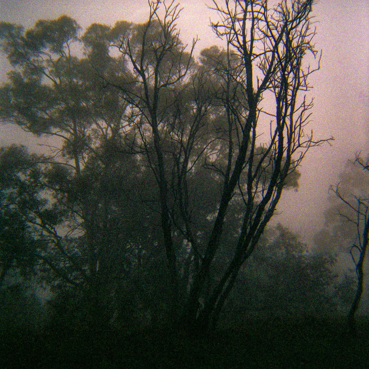 Canberra, Australia, Trees in Fog 1, 2015