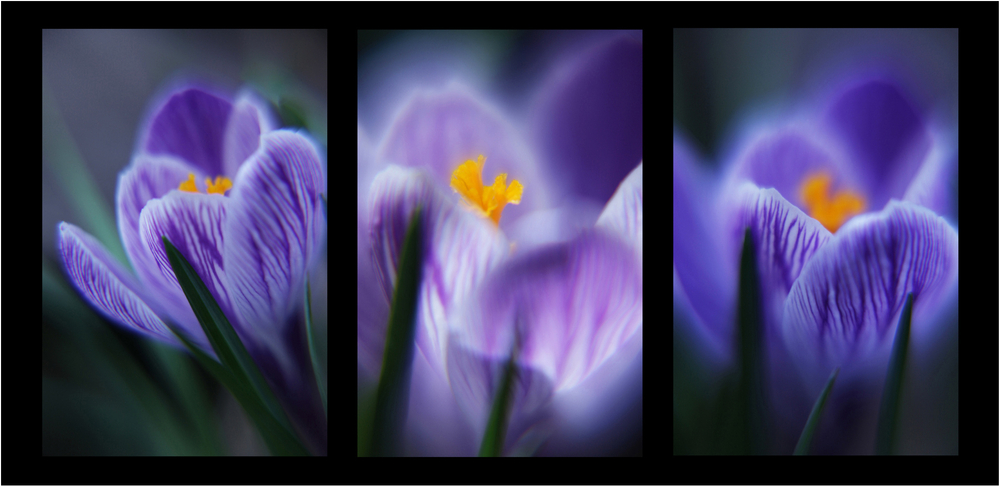1r3_flowers2use.jpg