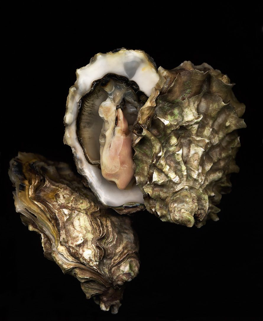 1oyster_