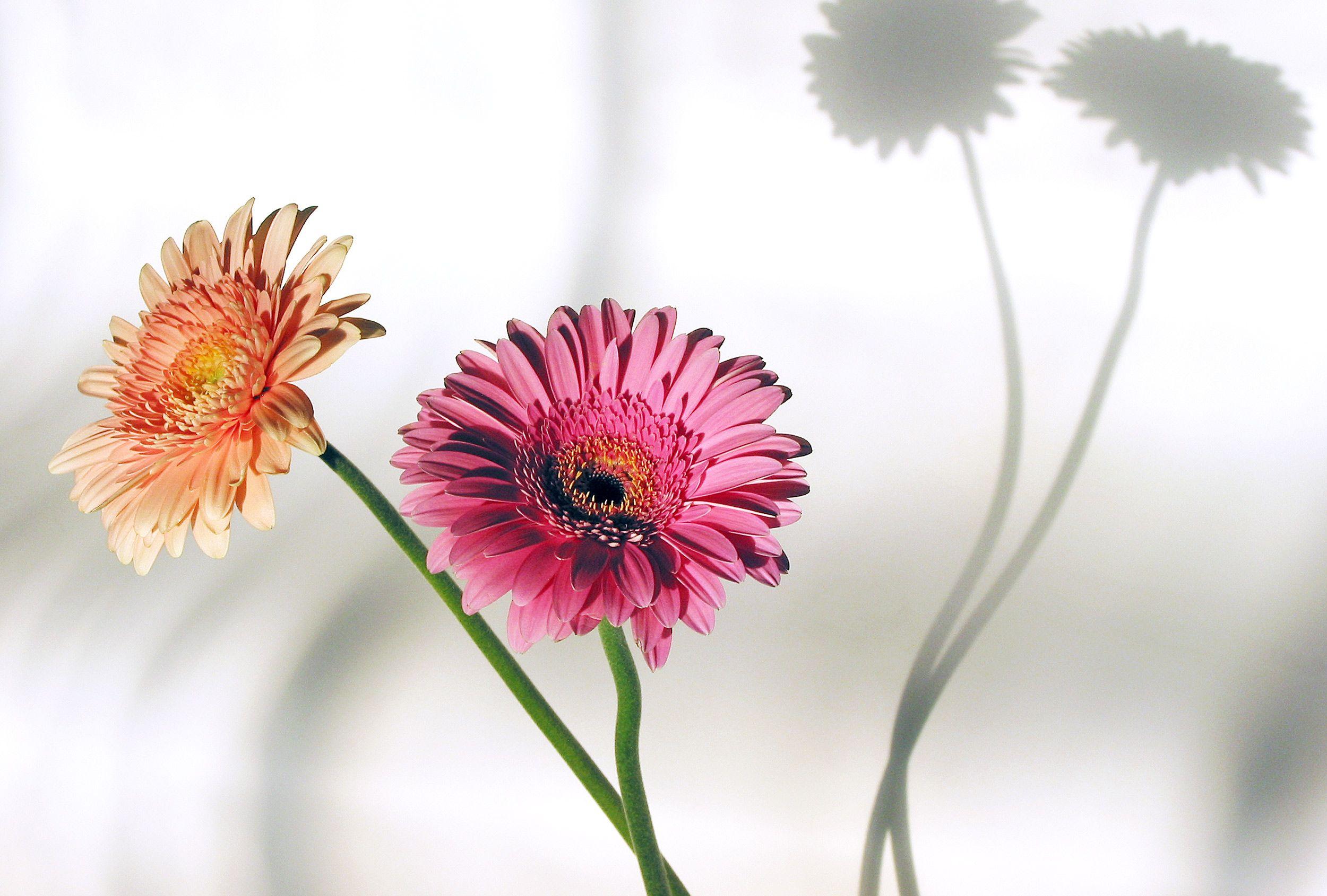 2_Flowers.jpg