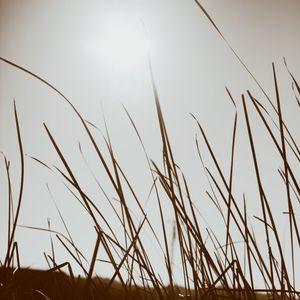 Grasses, Calistoga, California