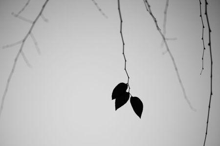 Three Elm Leaves, Sunnyvale, California