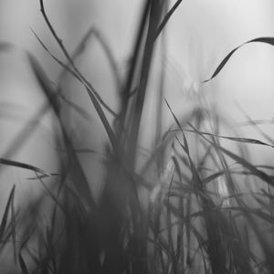 Grasses, Mountain View, California