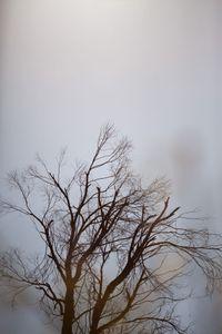 Tree, Mountain View, CA
