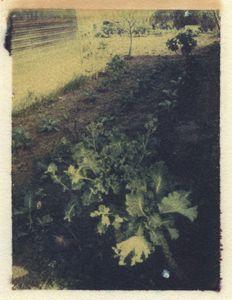 California (Polaroid Transfer)