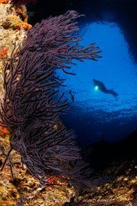20 novembre 2017_ chinese wreck_Los Islotes_MG_3047.jpg