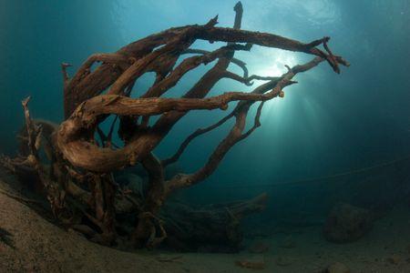 (50x40)Souche d'arbres Lac de Thoune.jpg