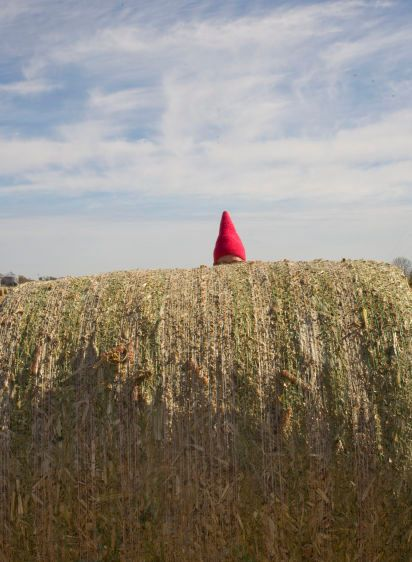 Gnome in the Hay