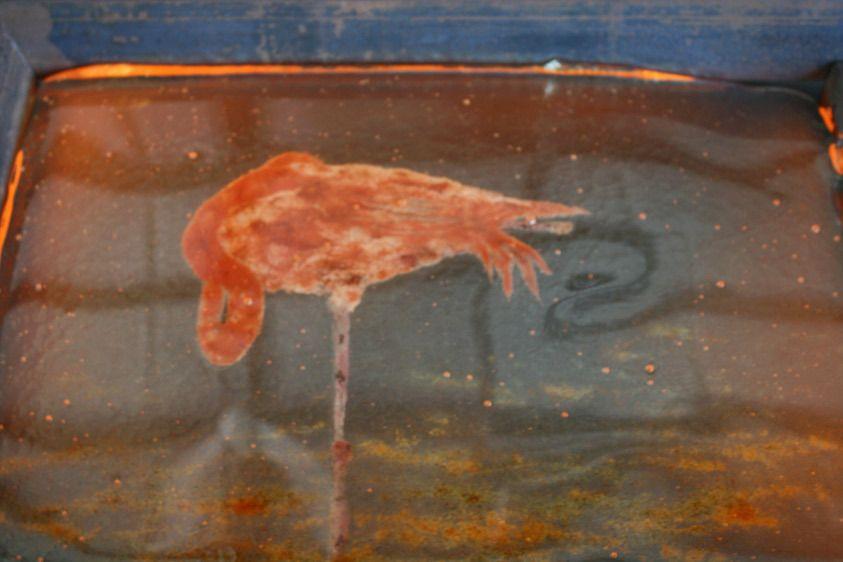 1sleeping_flamingo_hot.jpg