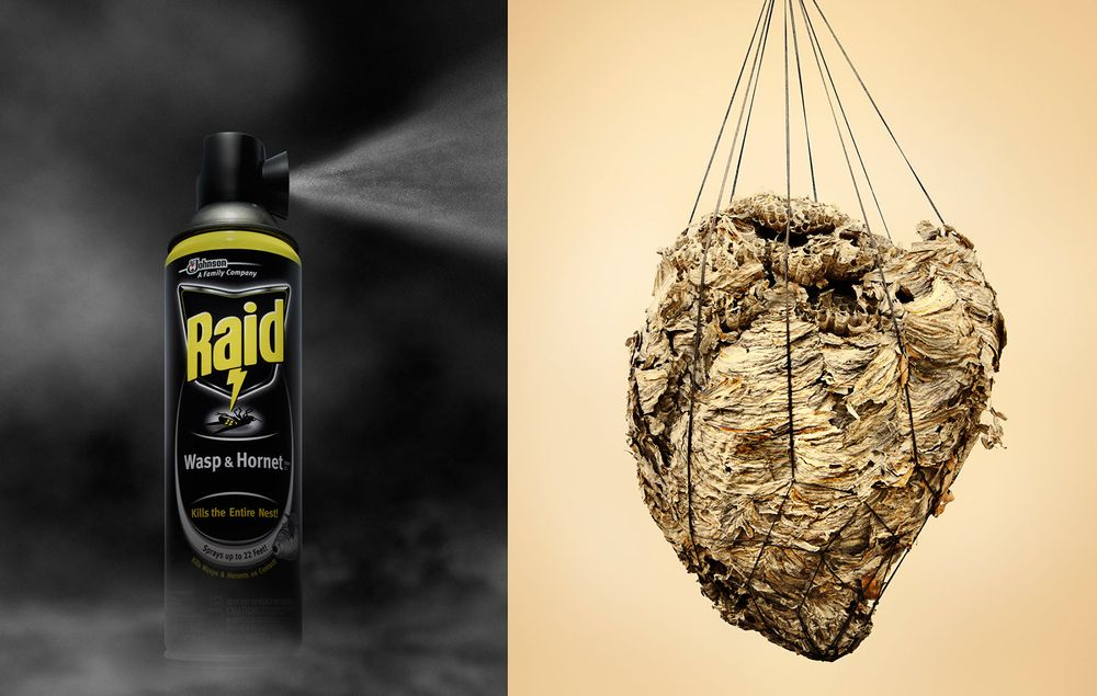 Wasp Nest and Spray by Kevin Twomey