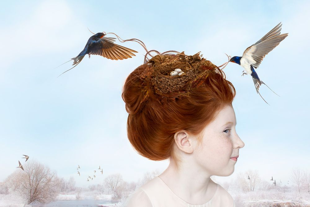 Composite of Swallow Nest  in Hair