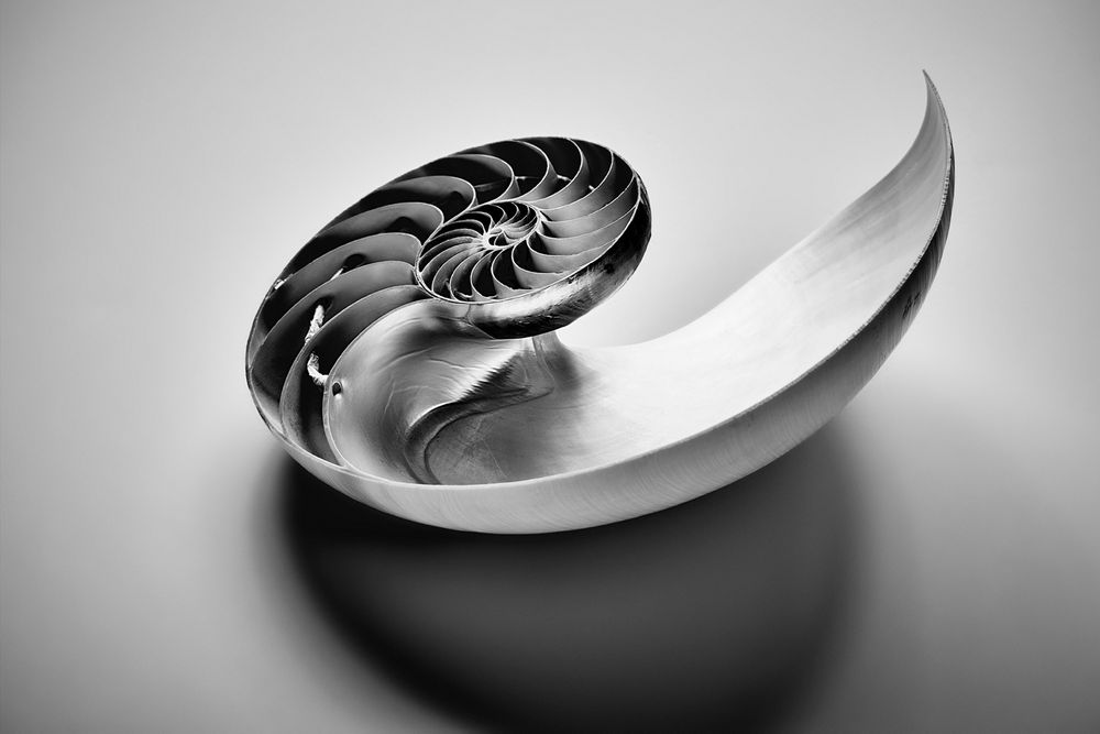 Nautilus Shell Retouching