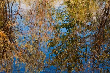Tree Reflections Abstract, Indian Creek, Indian Valley, Plumas County, Northern Sierra Nevada, California, copyright 2012 David Leland Hyde.