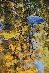 Detail, Fall On Wolf Creek Near Greenville, Northern Sierra, California.